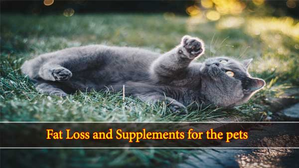 Fat Loss and Supplements for the pets