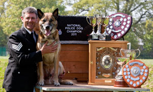 SPUD the German Shepherd dog and his trophies