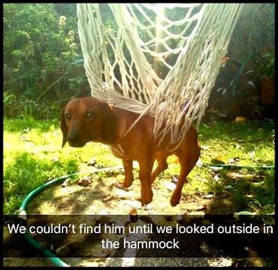 Funny Hangdog Dog In A Hammock