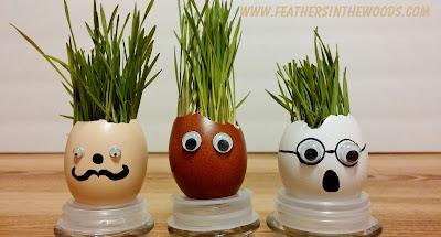 funny egg planter