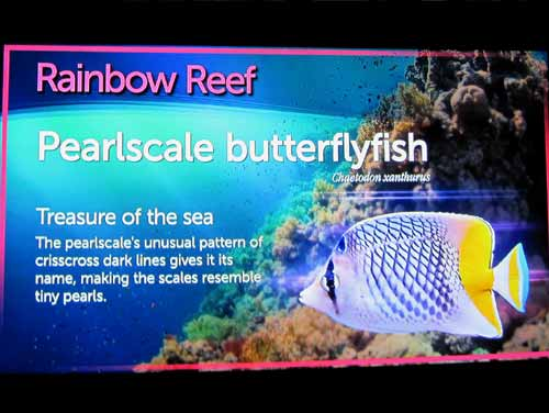 Example Of Ripley's Aquarium Rainbow Reef Signage