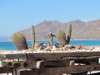 Isla El Carmen Baja California Sur