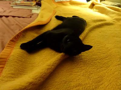 Η Μπιλίτσα, μια όμορφη μαύρη γάτα
