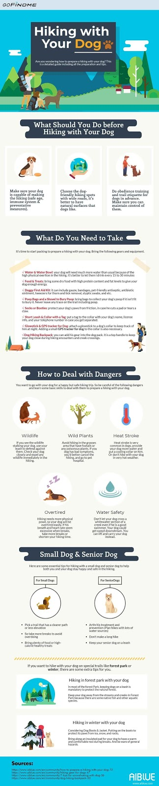 Practical Tips for Hiking with Your Dog