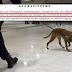 Με σκύλους θα ψάχνουν για μετρητά στα αεροδρόμια...