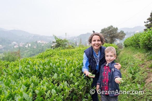 Rize ziraat çay bahçesinde oğlumla çay toplarken