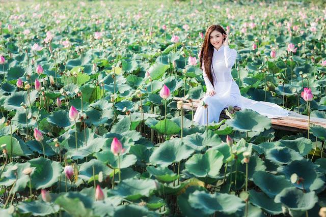 Hồ sen Xuân Bình