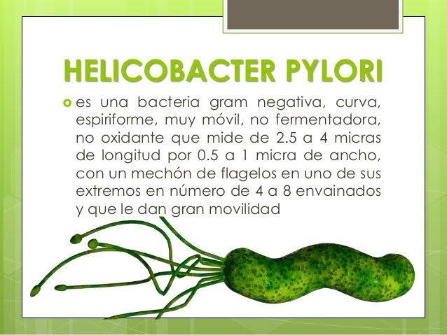parasito del estomago helicobacter