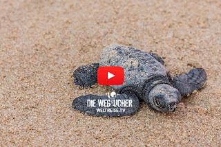 Mirissa Beach Sri Lanka Babyschildkröten schlüpfen direkt am Strand WELTREISE.TV