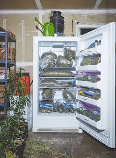 monjas mariguana