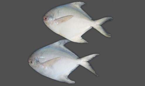 Pinch of swad konkani fish curry kandya ambat for Healthiest white fish