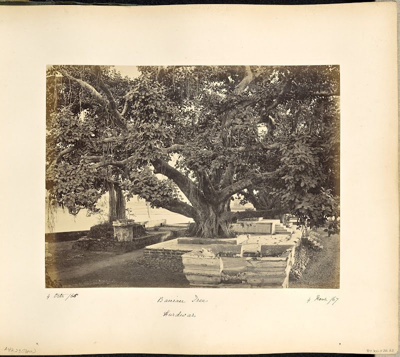 Large Banian Tree at Haridwar - Circa 1860's