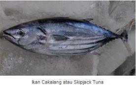 Ikan Cakalang (Skipjack Tuna)
