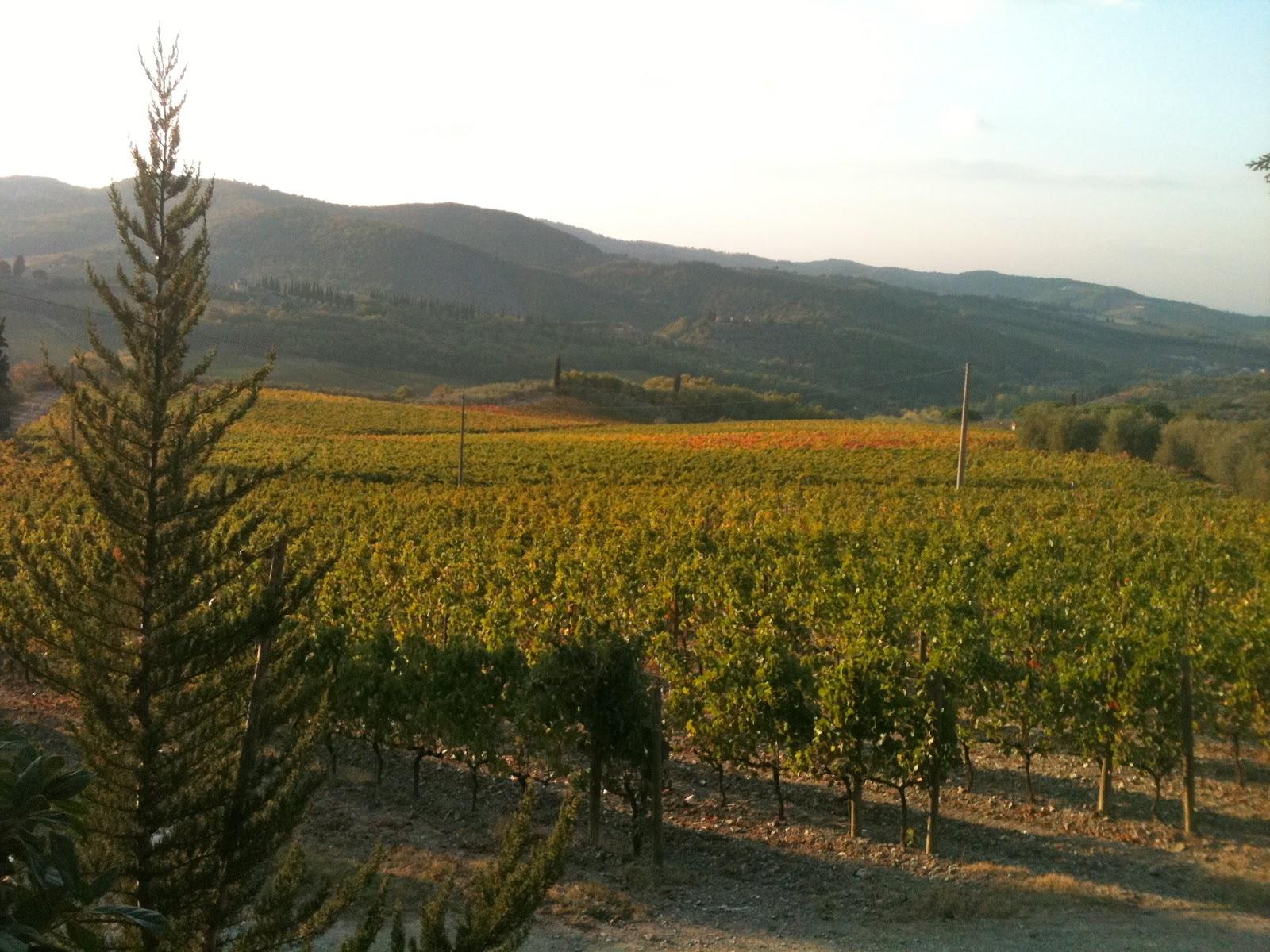 Wine in the Colchagua Valley in Chile