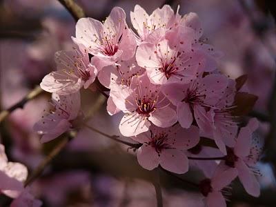 Foto Bunga Terindah Di Dunia