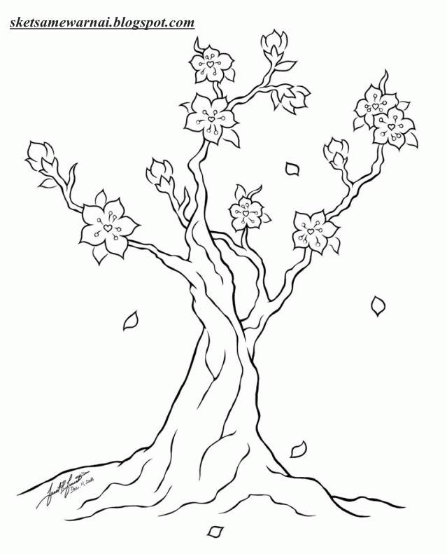Sketsa Mewarnai Gambar Bunga Sakura Sketsa Mewarnai