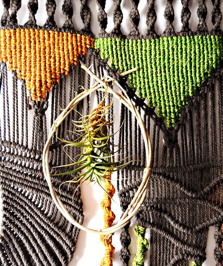 La Tillandsia es la planta del año, por eso seguimos haciendo diy con esta planta aérea tan magnifica