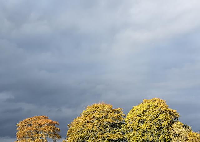 Sun on the trees and dark clouds around the nursery