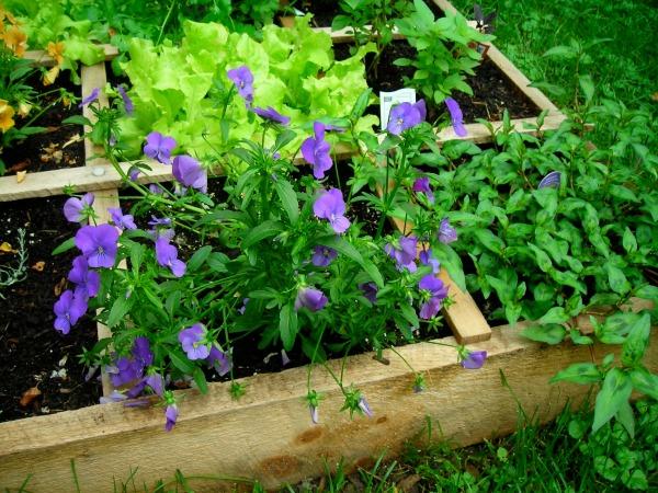 Lanark County Master Gardeners May 2016
