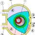 ما هو  محرك فانكل vankel engine