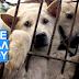 Σταματήστε το Φεστιβάλ βασανισμού των σκύλων!