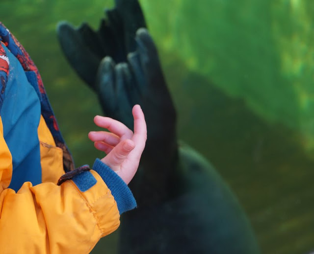 Kiellinie Seehundbecken Aquarium Kiel Geomar Kiel Glasscheibe