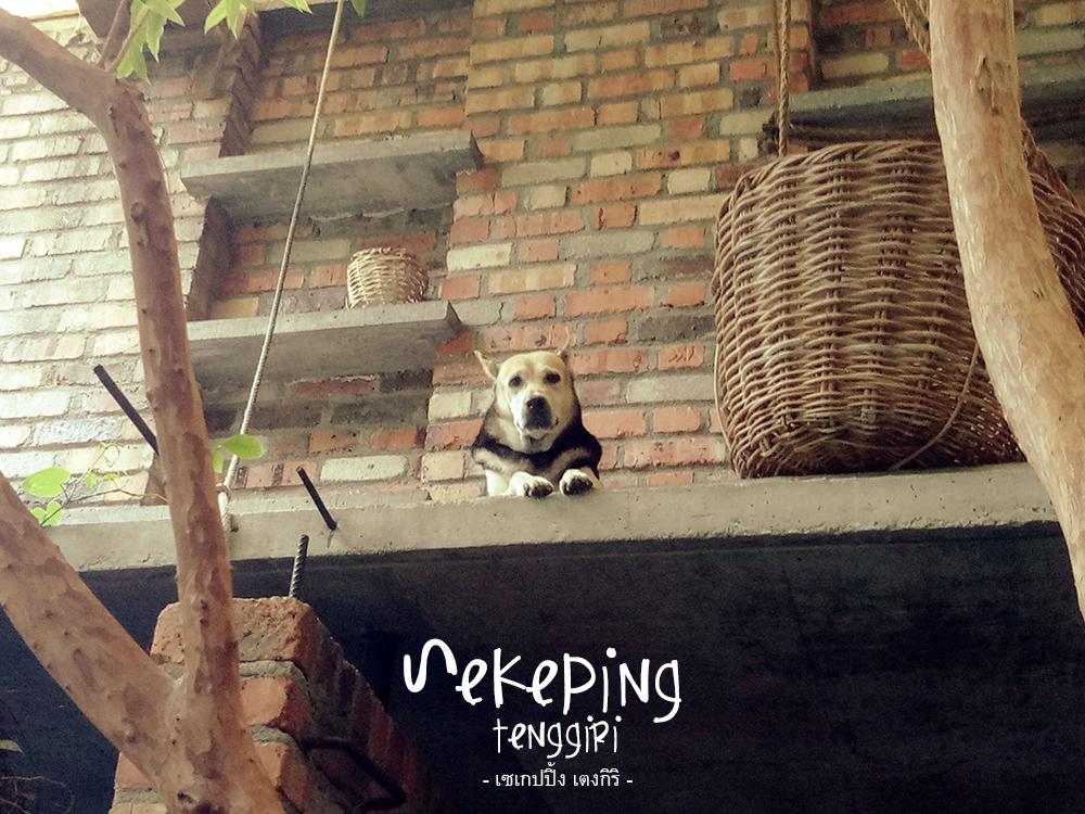 Sekeping Tenggiri : Pulai dog crew