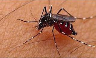 cara unik menangkap nyamuk menggunakan minyak goreng