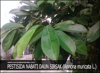 PESTISIDA NABATI dari bahan Daun SIRSAK (Annona muricata, Linn.)