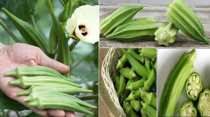 6 Manfaat yang Luar Biasa Ketika Mengkonsumsi Sayur Okra
