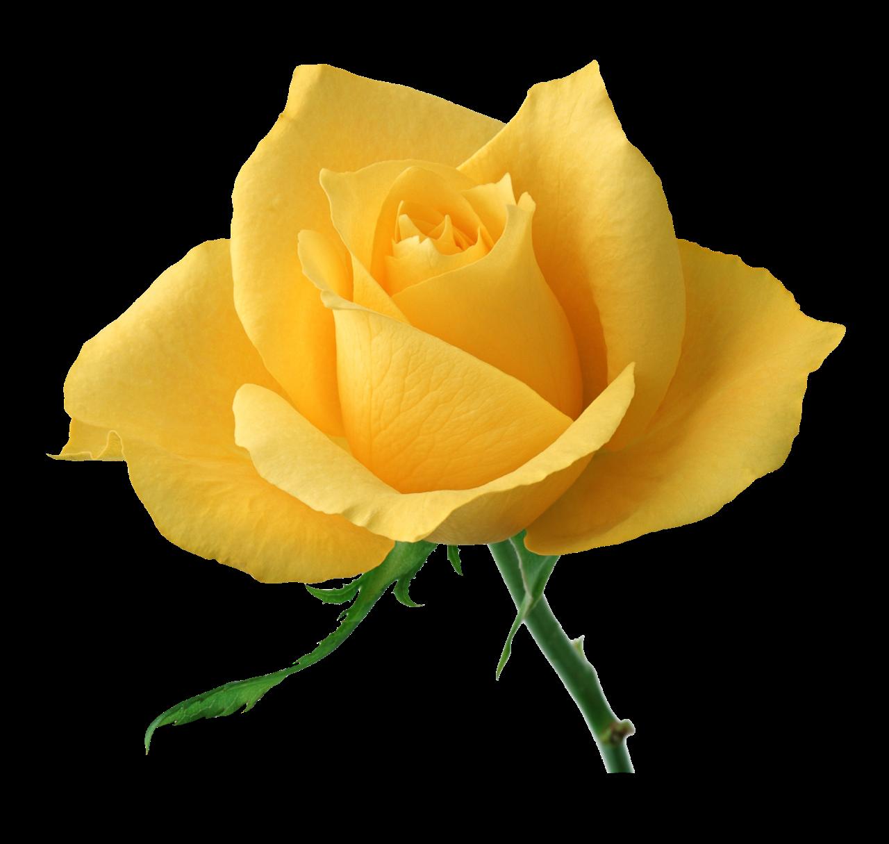 SARI+G%C3%9CL - Bugünkü çiçekler kime gitsin?