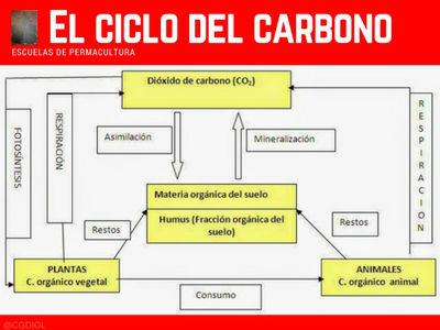 El ciclo del carbono se rompen con el cultivo, ya que libera parte del carbono almacenado en el suelo