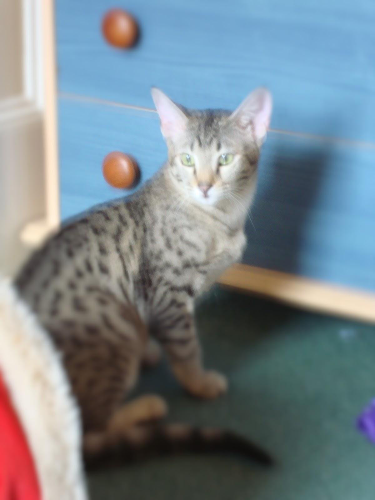 Stray Cat Rescue Milton Keynes