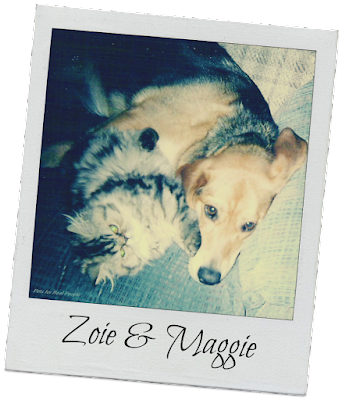 Dog and cats DO mix! This is Zoie snuggling up with Maggie.