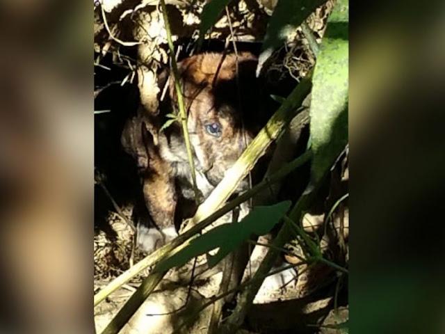 Despedida de soltero se vuelve misión de rescate de perros