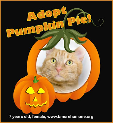 Pumpkin frame graphic with orange tabby cat