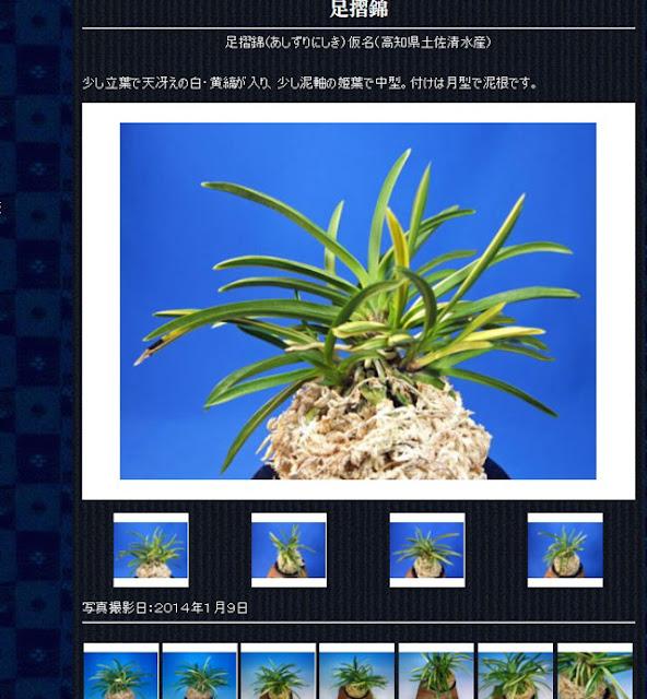http://www.fuuran.jp/jiman_asizurinisiki.html