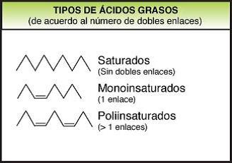 Resultado de imagen de tipos de ácidos grasos