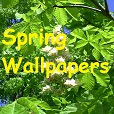 Wallpaper 'Spring'