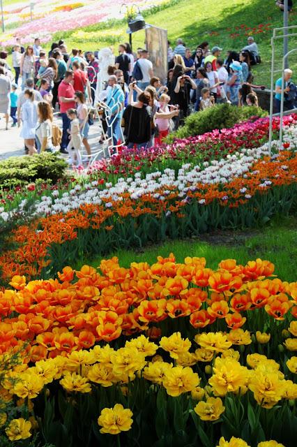 Необычные тюльпаны