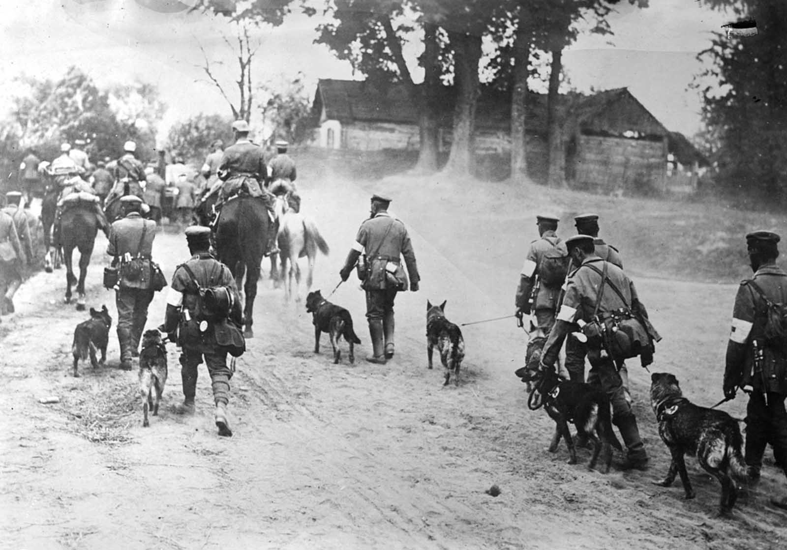 German Red Cross Dogs head to the front.
