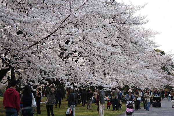 Taman Botanis Koishikawa