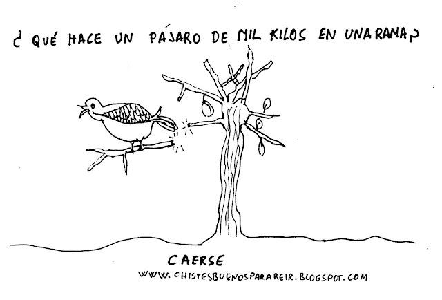 ¿Qué hace un pájaro de mil kilos en una rama? Caerse