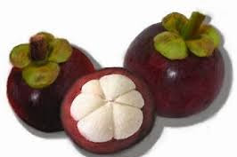 Manggis (Garcinia mangostana L.)