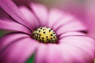 أجمل صور الأزهار والورود