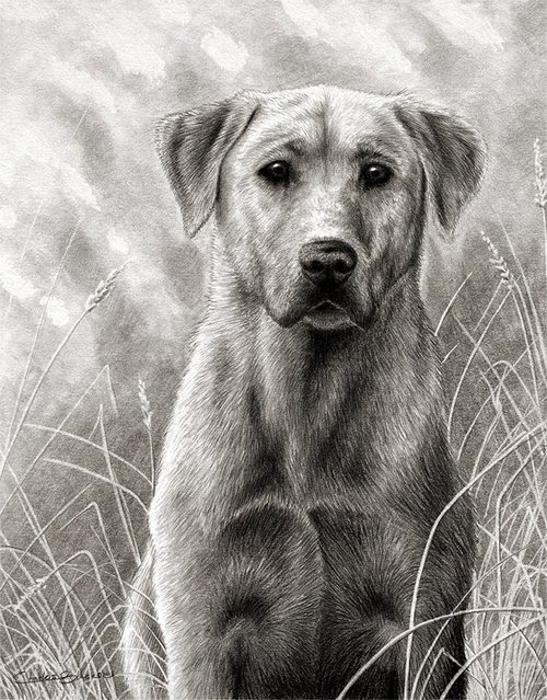 10-Charles-Black-Hyper-Realistic-Pencil-Drawings-of-Dogs-www-designstack-co
