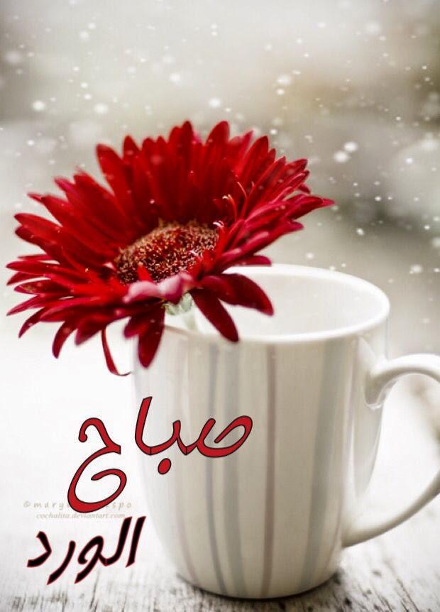 اجمل صور صباح الخير الجديده للواتساب فيس بوك أنستقرام