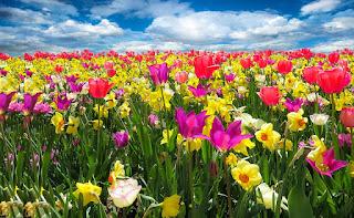 http://www.elconfidencial.com/sociedad/2017-03-17/equinoccio-primavera-cuando-es-20marzo-invierno_1350442/
