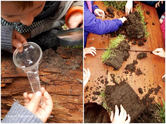 Observando un tronco en descomposición y panes de suelo - Chacra Educativa Santa Lucía