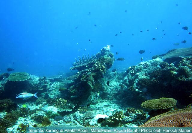 Wisata snorkeling di Manokwari